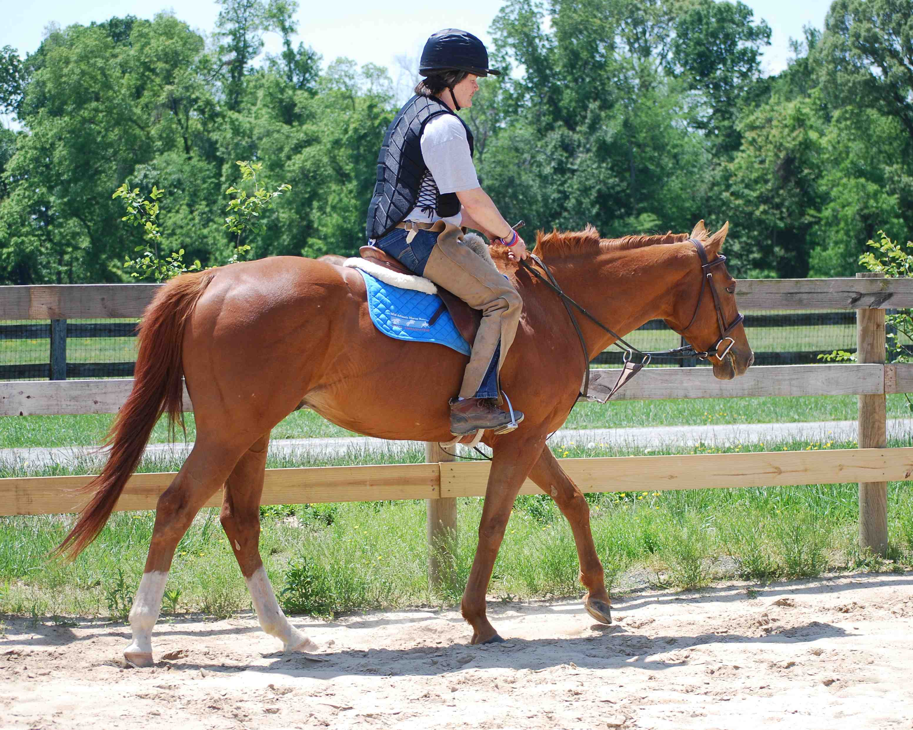 On The Right Track A Blog From Midatlantic Horse Rescue